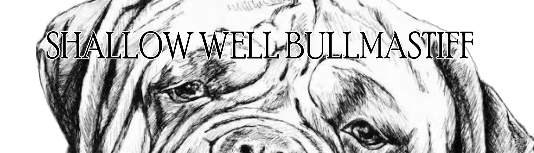Shallow Well Bullmastiff